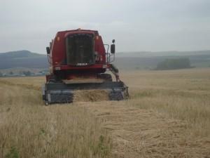 Намолот зерна